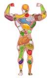 Athlete, healthy man, food. Diet. Vector illustration. Athlete food, healthy people. Diet protein food. Sport, bodybuilder. Vector illustration stock illustration