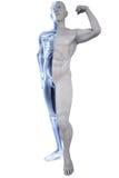 Athlete under Xrays Royalty Free Stock Image