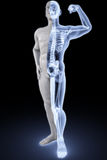 Athlete under Xrays. Man's body under X-rays. with clipping path stock images