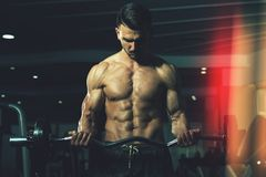 Biceps Exercise With Dumbbells In A Gym. Athlete Working Out Biceps In A Gym - Dumbbell Concentration Curls royalty free stock photography