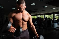 Bodybuilder Exercising Biceps With Dumbbells. Athlete Working Out Biceps In A Gym - Dumbbell Concentration Curls stock photography