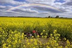 Athletenradfahrer auf einem goldenen Feld Lizenzfreie Stockfotografie