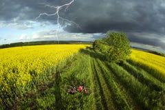 Athletenradfahrer auf einem goldenen Feld Stockfotos