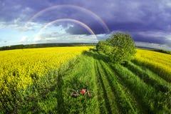 Athletenradfahrer auf einem goldenen Feld Lizenzfreies Stockbild