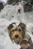 Athletes at Manyavsky Falls in Winter royalty free stock photos
