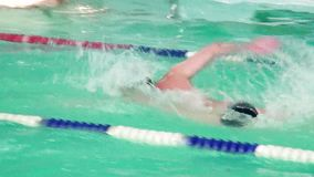 Athletes swimmers swim in the pool. Swimmers dive into the water. Swimmer compete in the pool stock video