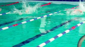 Athletes swimmers swim in the pool. Swimmers dive into the water. Swimmer compete in the pool stock video footage