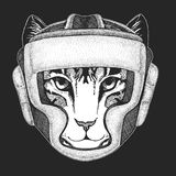 Athletic animal Domestic cat. Boxing champion. Print for t-shirt, emblem, logo. Martial arts. Vector illustration with. Image of domestic cat Hand drawn Stock Photo