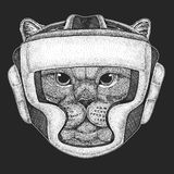 Athletic cat Boxing champion. Print for t-shirt, emblem, logo. Martial arts. Vector illustration with fighter. Sport. British noble cat Male Hand drawn image for Stock Photos