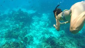 Athletic Girl Diving Underwater. Snorkeling Young Woman Swimming in Blue Cristal Clear Water. HD. Similan, Thailand. Athletic Girl Diving Underwater. Snorkeling stock video