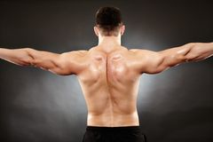 Athletic man doing bodybuilding moves for the back muscles. Studio shot of bodybuilder showing his back muscles stock photography