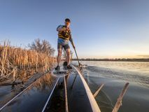 Athletic senior man on paddleboard. Athletic senior man on a stand up paddleboard in sunset light on a calm lake in Colorado, bow view stock photo
