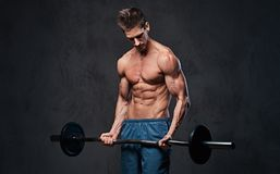 Athletic shirtless male biceps barbell workout. Athletic shirtless male biceps barbell workout over grey background Royalty Free Stock Photography