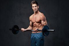 Athletic shirtless male biceps barbell workout. Athletic shirtless male biceps barbell workout over grey background Royalty Free Stock Images