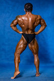 Athletic sports bodybuilder demonstrates posture from the back Stock Photography