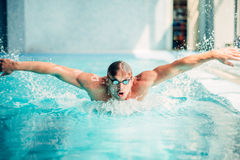 Athletic swimmer swims in butterfly style Royalty Free Stock Image