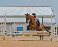 Athletic teen girl jumping a horse over rails. Royalty Free Stock Photography