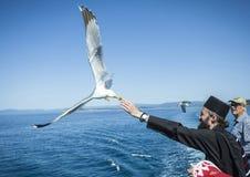 Athos seagulls Arkivfoto