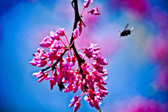 Atividade da abelha Imagem de Stock