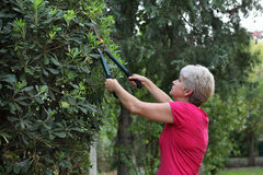 Atividade de jardinagem Imagem de Stock Royalty Free
