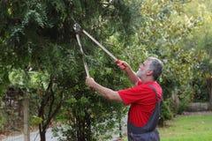 Atividade de jardinagem Imagem de Stock