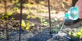 Atividade de jardinagem exterior Imagens de Stock Royalty Free