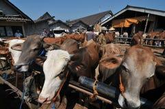 Atividade no mercado tradicional da vaca durante a preparação de Eid al-Adha em Indonésia Imagens de Stock