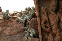 Atividades do macaco Fotografia de Stock Royalty Free