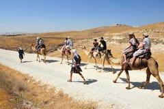 Atividades do passeio e do deserto do camelo no deserto Israel de Judean Fotos de Stock Royalty Free
