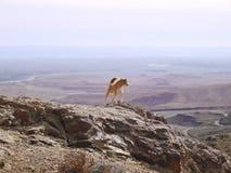 Atlant góry Obrazy Royalty Free