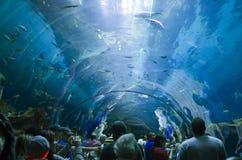 Atlanta Aquarium. Visitors looking at fish from an underwater tunnel in Atlanta Aquarium, Georgia, U.S.A Stock Photo