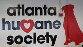Atlanta humant samhälle Royaltyfria Bilder