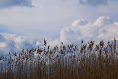 Atlante della nuvola Immagini Stock