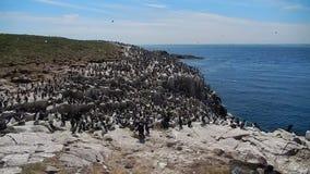 Atlantic birdlife stock video