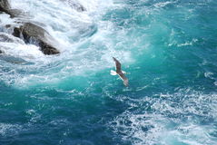Atlantic coast. Coast of the atlantic ocean Stock Photography