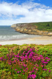Atlantic coast in Brittany. Heather blooming on Altantic coast in Brittany, France Royalty Free Stock Photo