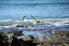 Atlantic coast in Morocco. Nice atlantic coast in Morocco Royalty Free Stock Image