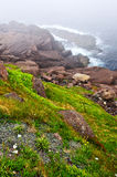 Atlantic coast in Newfoundland Stock Photo