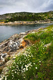Atlantic coast in Newfoundland Stock Images