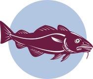 Atlantic cod Stock Images