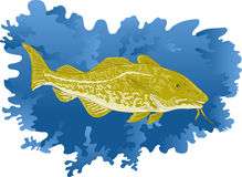Atlantic cod fish. Vector illustration of  atlantic cod fish done in water color style Royalty Free Stock Photo