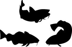 Atlantic cod fish. Vector art on Atlantic cod fish silhouettes isolated on white Stock Image