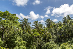 Atlantic Forest Stock Photography