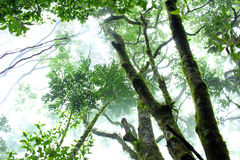 Atlantic forest. Smooth atlantic forest with fog Royalty Free Stock Images