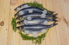 Atlantic herring with ice cubes Stock Photo