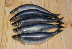 Atlantic herring Stock Images