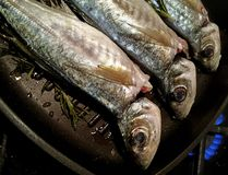 Atlantic horse mackerel on the grill Royalty Free Stock Images