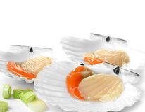 Atlantic King Scallops Royalty Free Stock Photography
