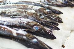 Free Atlantic Largehead Hairtails On Traditional Fish Market In Funchal Stock Photography - 105162502