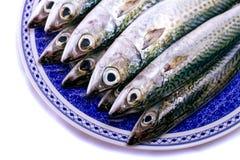Atlantic mackerel Stock Photos